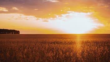 Agricultores e criadores têm até 31 de dezembro para se inscreverem no CAR.
