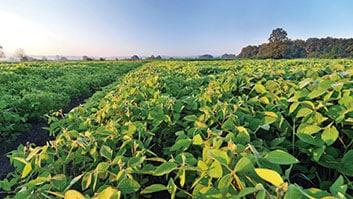 TJGO suspende exigibilidade de cédula de produto rural firmada entre agricultor e empresa que não entregou insumos.